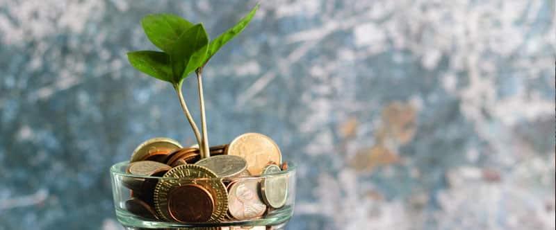 Photo d'une plante en pot, mais le peau est transparent et rempli de pièces de monnaie